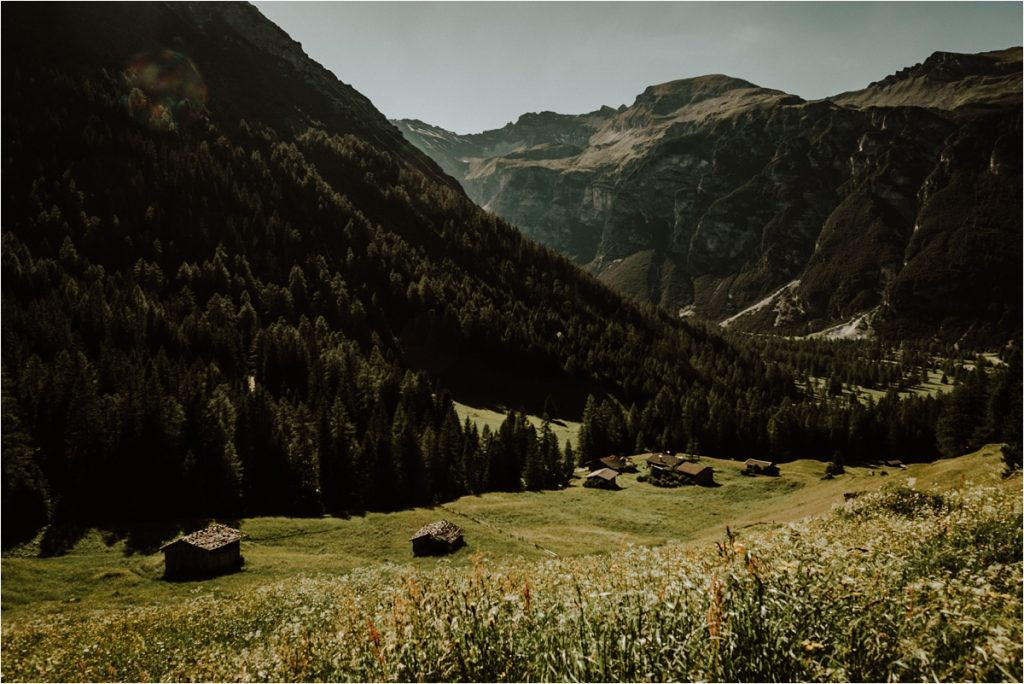 Austrian Alpine meadows by Wild Connections Photography